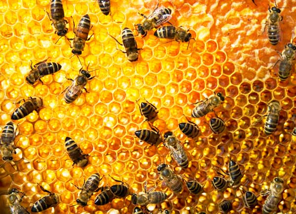 Honey You Should Never Buy – It May Be Tainted with Lead and Antibiotics
