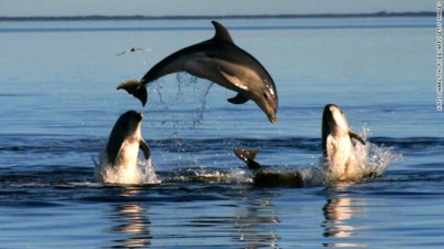Dolphins Are Mysteriously Dying Around The World