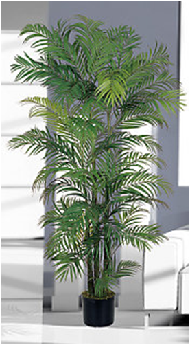 Household Plants That Improve Indoor Air Quality World