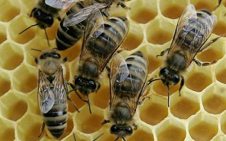 Illinois Department of Agriculture Secretly Destroys Beekeeper's Bees