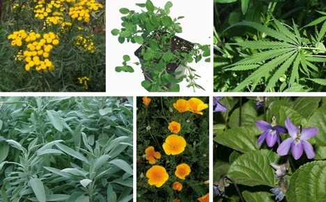 Nature's Most Powerful Medicinal Plants