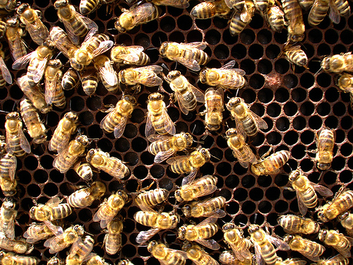 Beekeepers Sue EPA Over Failing to Stop Harmful Pesticides