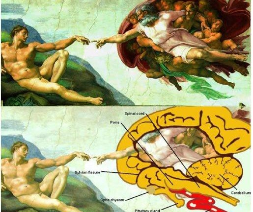 Is This Michelangelo's Hidden Message?