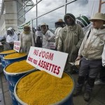 France to Maintain Ban on GMO Crops