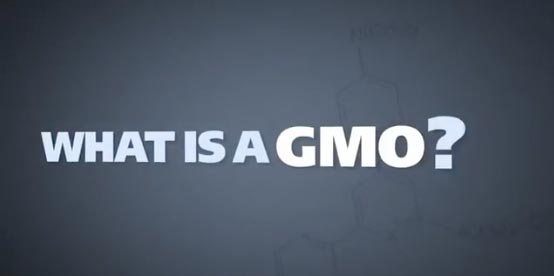 Side Effects of GMOs – Ask your Doctor if CANCER is Right for You