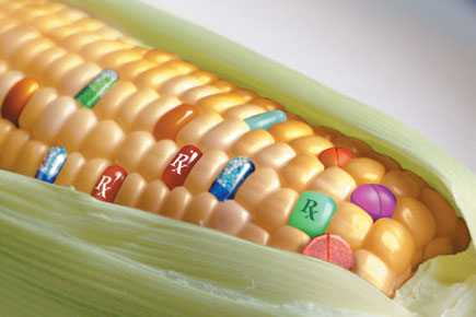 "GMO Corn Found in Humans Creates a ""Living Pesticide Factory"""