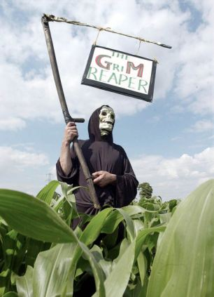 POLICE GM 1...An environmental campaigner, Sunday July 16, 2000 wearing a Grim Reaper outfit and preparing to destroy GM modified maize crops currently being grown on a fifty acre site at Over Compton near Sherborne, Dorset. A number of environmentalists were arrested during the event organised by the direct action campaign group SURGE (Southern Union of Resistance to Genetic Engineering). See PA News story POLICE GM. PA photo: Richard Lappas....A