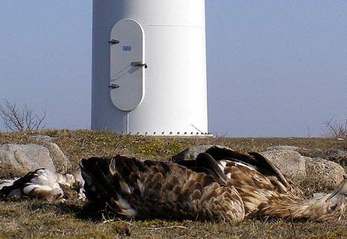 eagle, dead at wind turbine_0