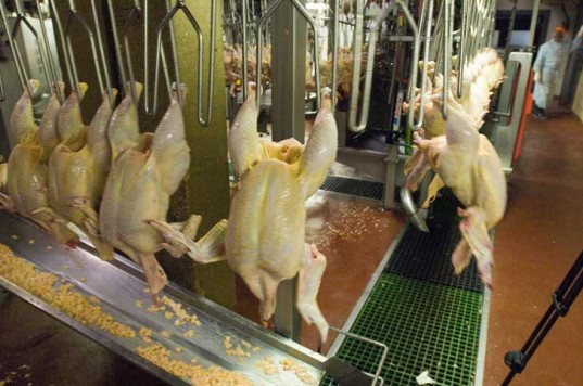 usda-poultry-processing-537x356