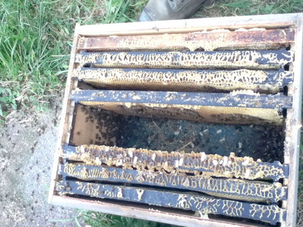 37-million-bees-found-dead