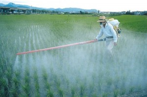 Glyphosate-Spraying-300x198