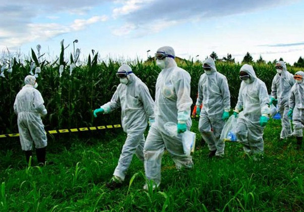 Italy to Ban Monsanto GMO Corn with 80% Public Support