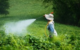 pesticide_spraying-263x164