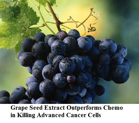 Grapeseed Extract Better than Chemo at Halting Advanced Cancer