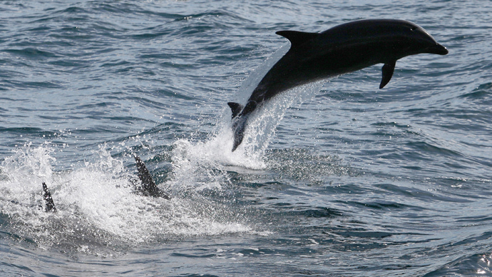 Open Sea US Navy Testing will Kill Hundreds of Dolphins and Whales