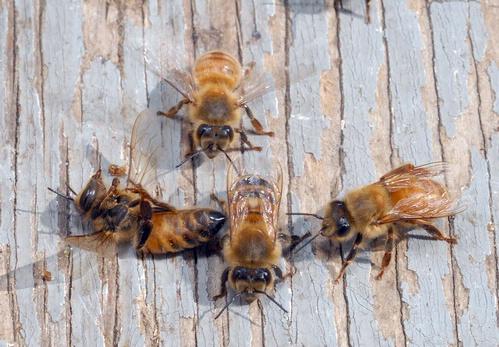 Tell Home Depot and Lowe's to Drop Plants Treated with Bee-Toxic Pesticides