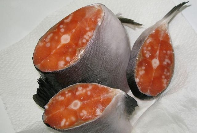 Creepy White Stuff In Alaskan Salmon