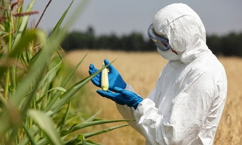 New Study Links GMOs To Gluten Disorders That Affect 18 Million Americans