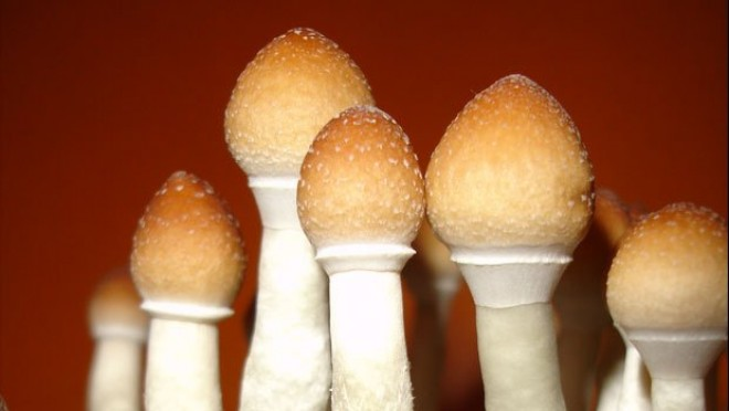 Psychedelics Don't Harm Mental Health; They Improve It Thumb