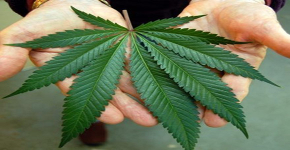 Cannabis-Helped-Treat-Leukemia-In-Teenage-Girl-–-Doctors-Publish-Case-Study
