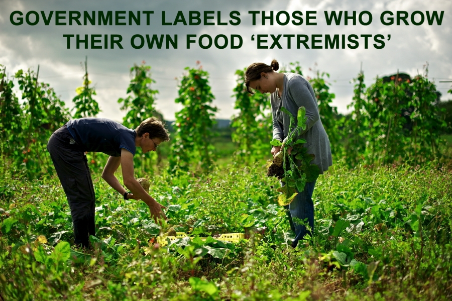 People Who Grow Their Own Food Labeled 'Extremist' by Dept. of Defense
