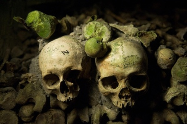 _images__news_2008_05_photogalleries_wip-week79_images_primary_1_SKULLS_461