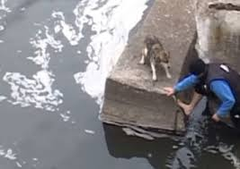 This Dog Has An Amazing Reaction Right After Being Rescued