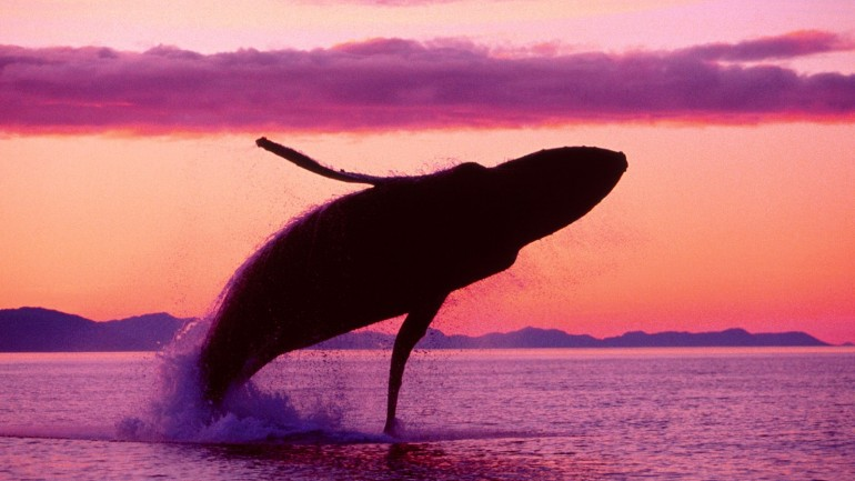 U.S. Navy Killing Thousands of Whales & Dolphins With Sonar & Weapons Testing