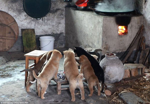 puppies-around-fire5
