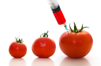 The DNA From GMO Can Be Transferred to the Person Who Eats Them