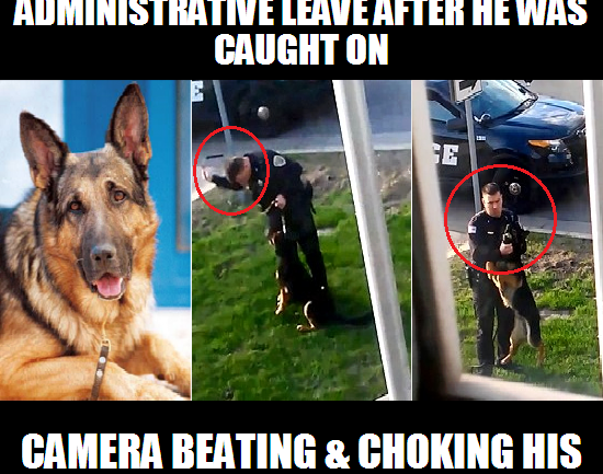 If Cops Treat Their Own Dogs Like This, It is No Wonder They Shoot Everyone Else's
