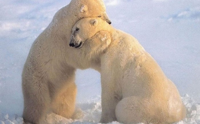 Animals Sharing Some Love With a Good Old-Fashioned Hug