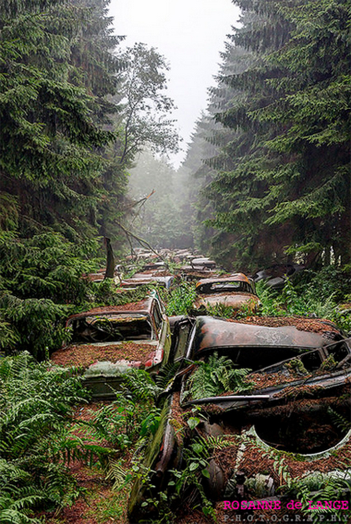 Most Haunted car Cemetery: 'WWII Traffic' Drowned in Belgian Moss For 70 Years