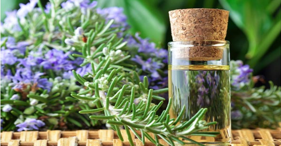 Study-Shows-Sniffing-Rosemary-Can-Increase-Memory-by-75