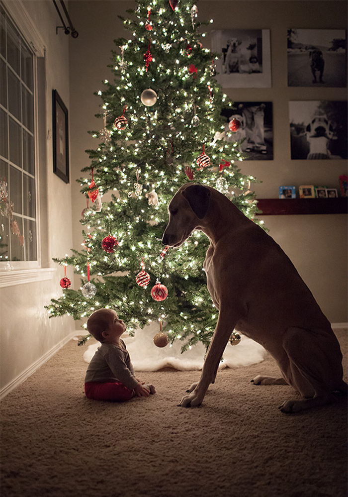 cute-big-dogs-and-babies-34