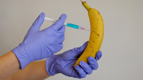GMO Bananas Arrive For Their First Test In Iowa‏