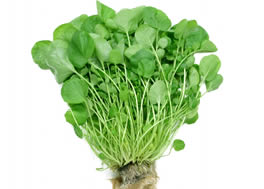 watercress_-d1_small