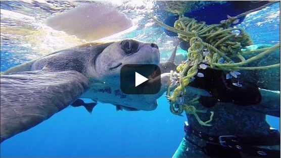 This Rescued Sea Turtle Says 'Thank You' In A Way That Will Move You To Tears