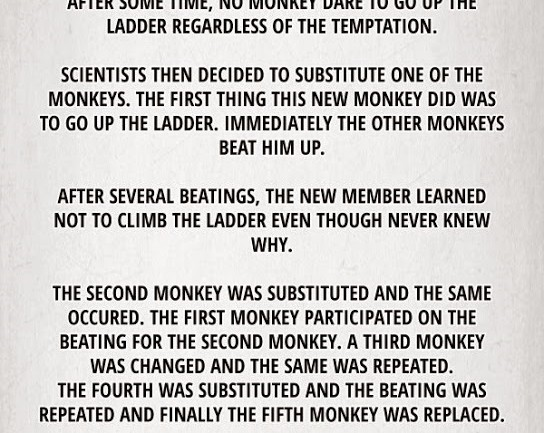 The Monkey Experiment That Will Teach You How The World Works