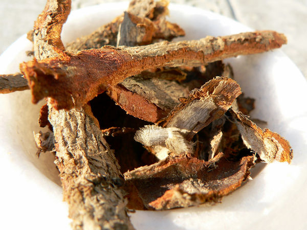 dried-sassafras-root-bark_l