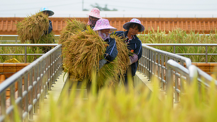 GMO Production in China Halted
