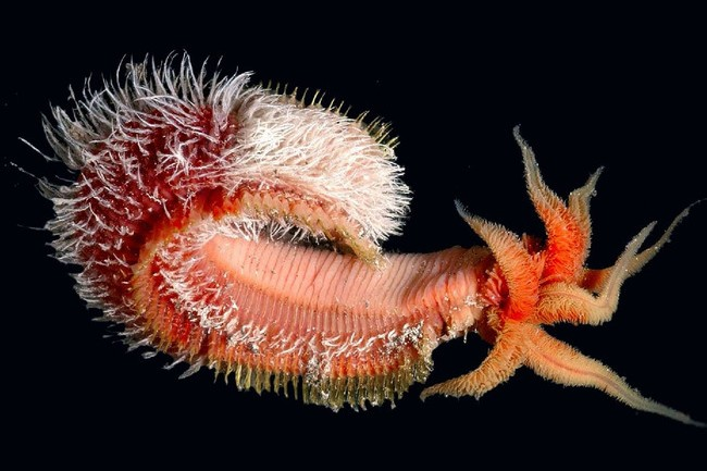 How Can These Disgustingly Scary Deep-Sea Creatures Even Exist?
