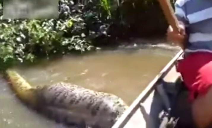 Brazilian Men Find Giant Snake In River, Biggest Anaconda Ever Found