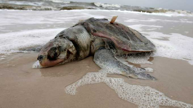 fukushima-effects-dead-seas-life