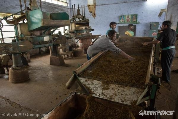 Report Finds 34 Pesticides in Tea From India