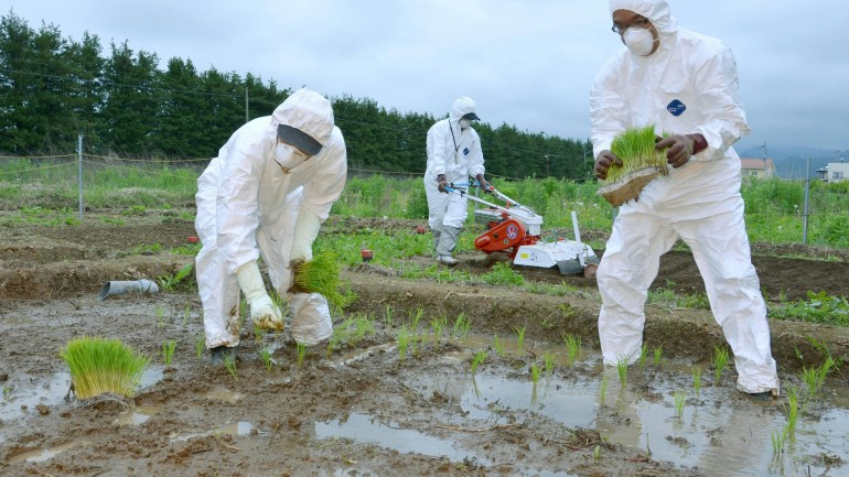 Govt OK's Growing Rice for Public Sale Within Fukushima Contamination Zone