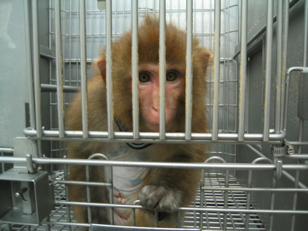 1.-monkey-in-cage