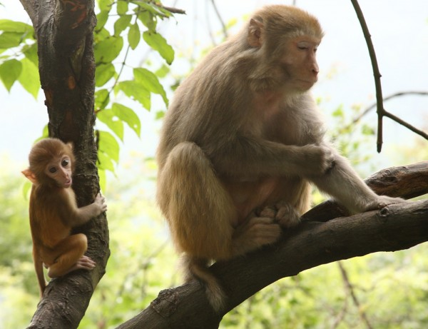 2.-monkey-and-baby-in-tree