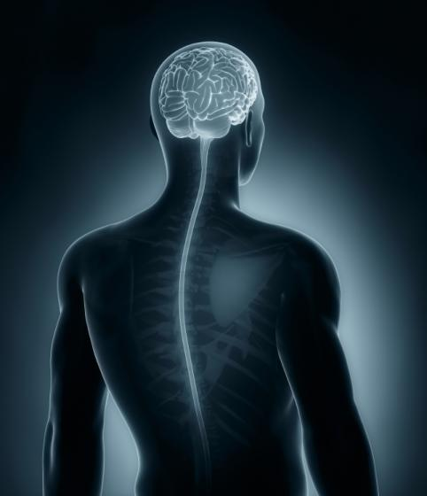 brain-spinal-cord