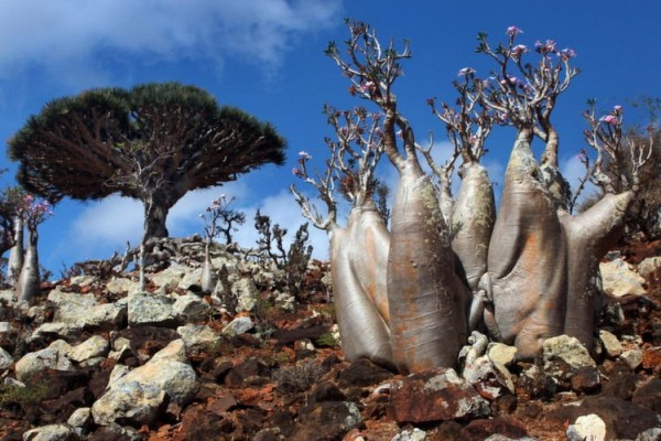 nature-socotra-weirder